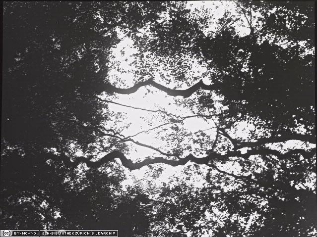 Ilustrasi : Hutan di Sibolangit.Tanaman Liane. Copyright Notice : ETH-Bibliothek