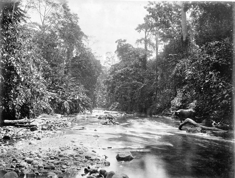 Sungai Mencirim. Foto oleh G.R. Lambert & Co. (1880-1895)