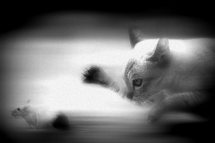 ilustrasi tikus dan kucing